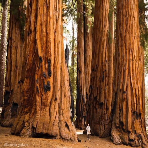 @anna_jalan_trees