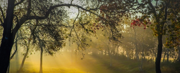 sunrise-trees-fog-canon-xc10-nature-tree-1446449-pxhere-com.jpg